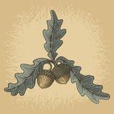Acorn woodcut ilustracja wektor