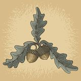 Acorn woodcut. Hand drawn acorns and oak leaves with woodcut shading on grunge beige background Royalty Free Stock Photos