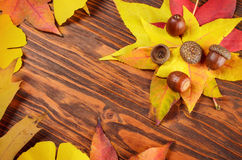 Acorn on yellow autumn leaves at wooden table Stock Photo