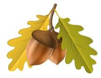 Acorn z liściem dla jesieni ilustracja wektor