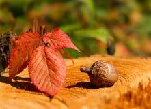 Acorn z liściem na drzewnym fiszorku Zdjęcia Royalty Free