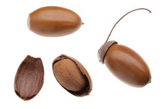 Acorns. The acorns on white background Royalty Free Stock Images