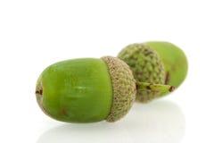 acorns Zdjęcia Stock