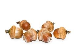 Acorns. Royalty Free Stock Image