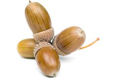 Acorns Royalty Free Stock Photography