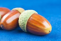 The acorns Stock Photography