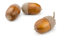 Acorns. Three brown acorns isolated on white Royalty Free Stock Photos