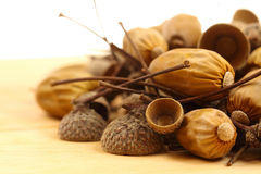 Acorns Royalty Free Stock Image
