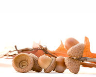 acorns Obrazy Royalty Free