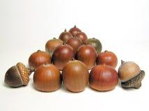 Acorns. Pyramid acorns on white background Stock Image