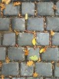 Acorns and autumn foliage lying on stonework Royalty Free Stock Photography