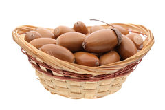 Acorns in basket. On white background Stock Photography
