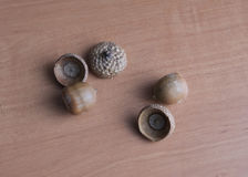 Acorns. And caps on a wooden Board Royalty Free Stock Images