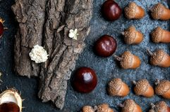 Acorns and chestnuts on black Royalty Free Stock Photos