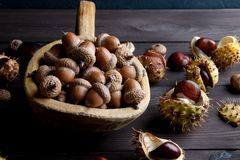 Acorns and  chestnuts on brown Stock Images