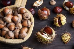 Acorns and  chestnuts on brown Royalty Free Stock Photo