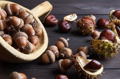 Acorns and  chestnuts on brown Stock Photography