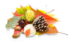 Acorns, chestnuts and leaves Stock Photo
