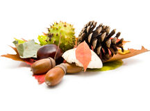Acorns, chestnuts and leaves Stock Image
