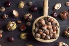 Acorns and  chestnuts on brown Stock Image