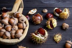 Acorns and  chestnuts on brown Royalty Free Stock Photography