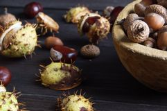Acorns and  chestnuts on brown Royalty Free Stock Images