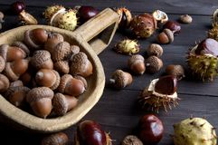 Acorns and  chestnuts on brown Royalty Free Stock Image