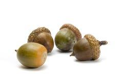 acorns cztery Obrazy Stock