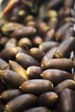Acorns dla acorn karmili Iberyjskiego Hiszpańskiego baleron świni jedzenie Obraz Stock