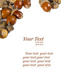 Acorns frame with space for text Stock Photos
