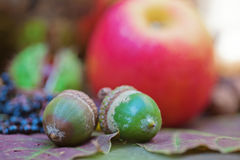 Acorns in front of autumnal fruits Stock Images