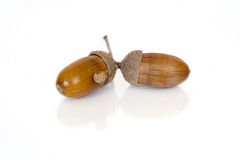 Acorns isolated over white Royalty Free Stock Photo