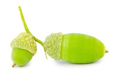 Acorns isolated Royalty Free Stock Images