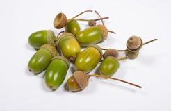 Acorns isolated on white. Fresh green acorns isolated on white background Royalty Free Stock Image