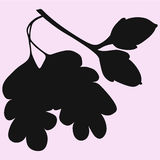 Acorns with leaf. Vector silhouette Stock Images