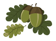 Acorns and leaves Royalty Free Stock Images