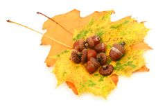 Acorns and leaves stock photography