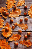 Acorns with leaves. Dark wood background. tinting. selective focus Royalty Free Stock Photos