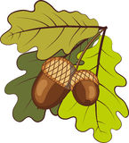 Acorns with leaves Royalty Free Stock Image