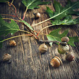 Acorns with leaves on wooden background Royalty Free Stock Image