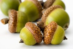 Acorns made out Royalty Free Stock Images