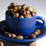 Acorns and MugAcorns and mug Stock Images