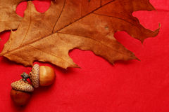 Acorns and oak leaf Stock Images