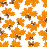 Acorns With Oak Leaves in Autumn Seamless Texture. Light brown acorns with dark brown hats on a branch with bright orange autumn oak leaves on a white background Royalty Free Stock Image