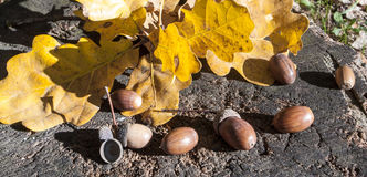 Acorns and oak leaves on hemp Stock Photo