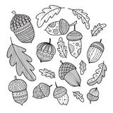 Acorns and oak leaves vestor set in boho style. With ornaments. Can be printed and used as coloring page, template, card, placard, etc Vector Illustration