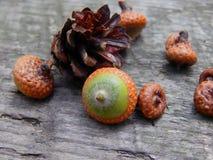 Acorns with an oak tree on a wooden surface. Closeup stock photos