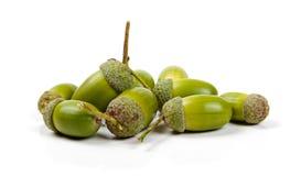 acorns odizolowywali biel Zdjęcia Royalty Free