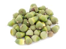 Acorns pile. Pile of wild acorns on a white background Royalty Free Stock Images