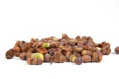 Acorns. A pile of acorns isolated on a white background Stock Photo